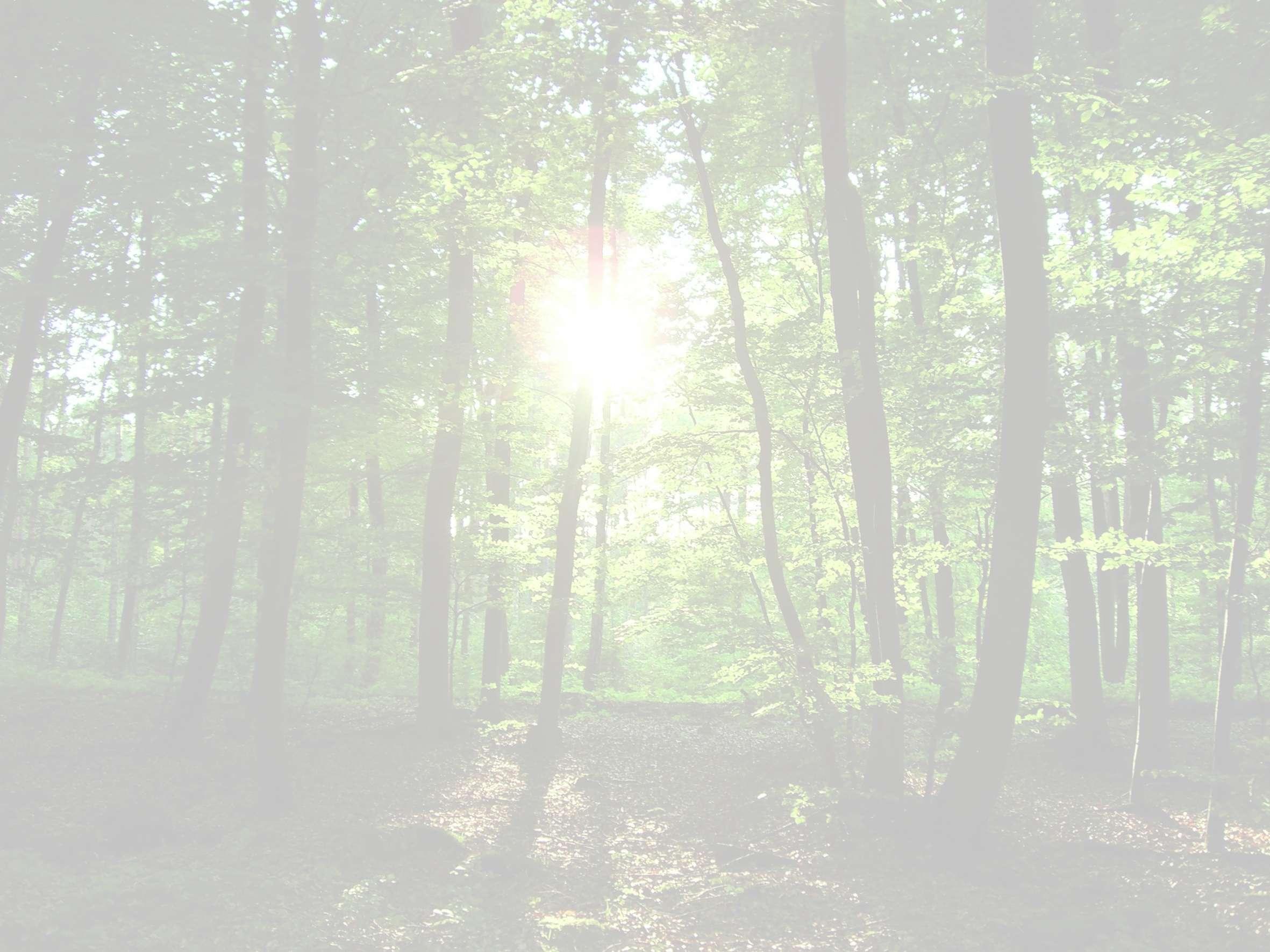 Klettergurt Für Baumpflege : Baumpflege schmidt seilklettertechnik